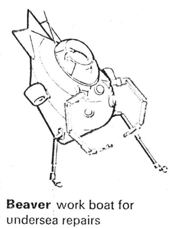 beaver-illustration_0001 - Copy-x640