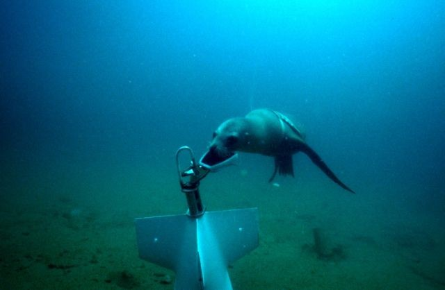 NMMP_Sea_Lion_Recovering_Test_Object-x640