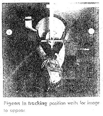 1940   Project Pigeon (1948   Project Orcon)   B.F. Skinner (American)